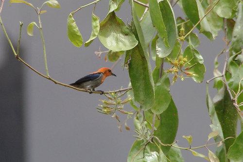 インドネシアの野鳥④: ita-san