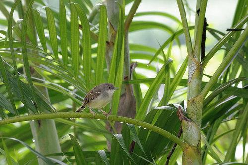 インドネシアの野鳥⑤: ita-san